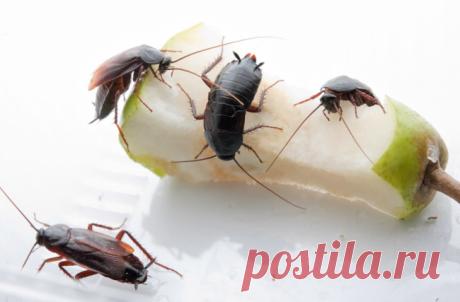 Как избавиться от тараканов в квартире навсегда: эффективные способы