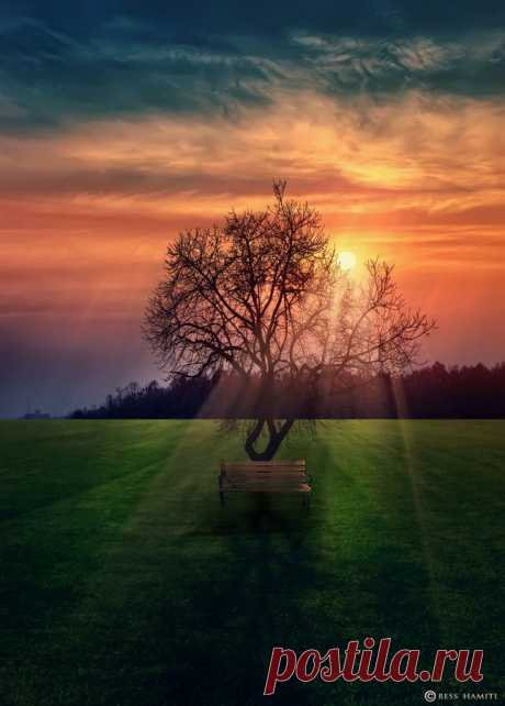 ••Sunset in Park  Tree & Path