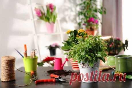 Благоприятные дни цветовода в апреле 2021 года для комнатных растений