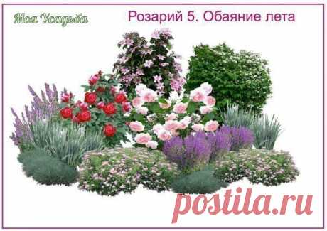 Розарии - создаём красивую клумбу на участке