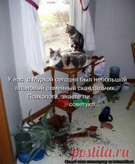 Плановый скандальчик... | KotoMail.ru