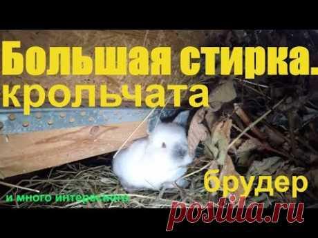 Большая стирка. крольчата,брудер,кролик кролиководство