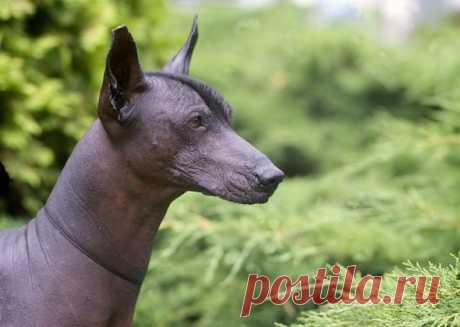 11 старейших пород собак   PetTips