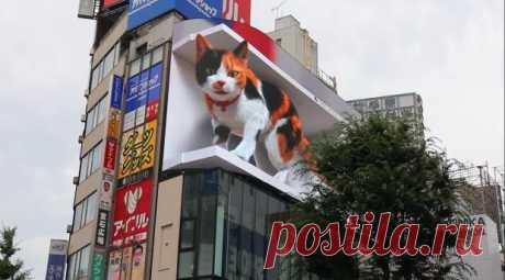 Гигантский мяукающий 3D-кот развлекает жителей и гостей Токио: завораживающее видео
