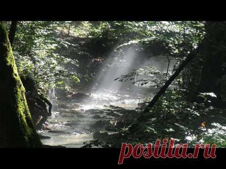 Как найти воду в лесу | Методика поиска | Подготовка воды