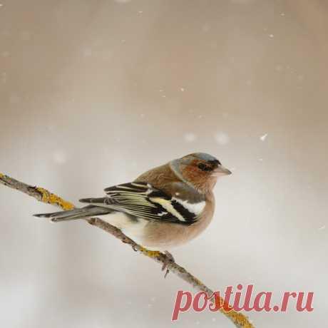 6 лет подкармливали птиц в лесу. Наши лучшие кадры снятые за это время. | 🔔 Дикая Природа Крыма. My-Mriya | Яндекс Дзен