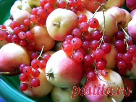 Варенье из яблок с красной смородиной - рецепт от участницы