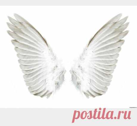 Картинки крыльев ангела (36 фото) ⭐ Забавник