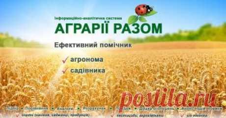 """Продаж насіння, саджанців Продаж насіння, саджанців. ІАС """"Аграрії разом"""""""