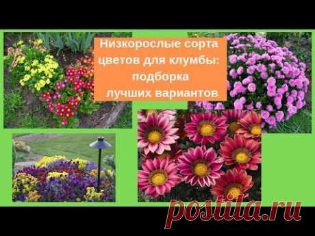 Садовые цветы: Низкорослые сорта цветов для клумбы: подборка лучших вариантов