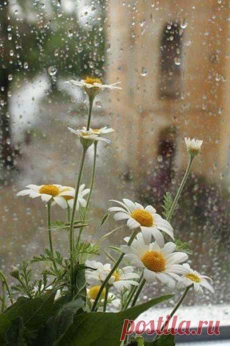 """Красиво прожитое """"Сегодня"""" делает каждое """"Вчера"""" чудесным Воспоминанием, а каждое """"Завтра"""" - полным Надежды....."""