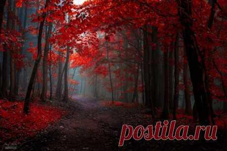 Осенний лес в просторах Моравии