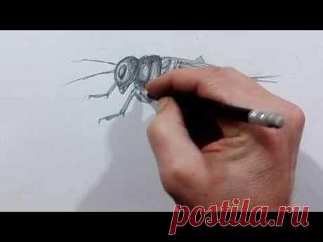Как нарисовать сверчка карандашом учимся рисовать насекомых жуков поэтапно сверчок