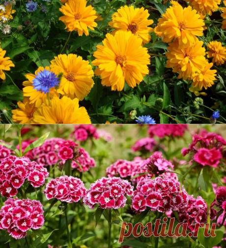 10 самых неприхотливых долгоцветущих многолетников для сада
