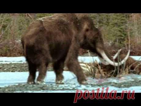 Нашли живого мамонта под Якутском! - YouTube