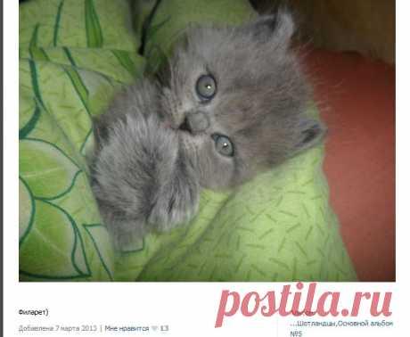 миленький котенок с кошачьего сайта