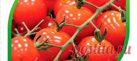 Томат черри Витаминка F1, 5 шт. Раннеспелый (80-90 дней), очень декоративный гибрид. Выращивать его можно, как в горшках для украшения балконов, окон, зимних садов, так и в открытом ...