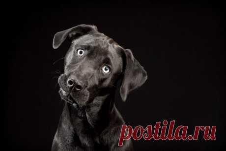 картинки собак на черном фоне: 6 тыс изображений найдено в Яндекс.Картинках