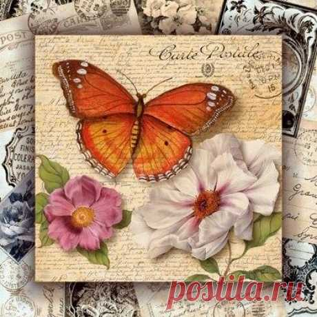 Картинки с бабочками для творчества