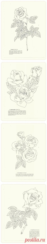 Любимые розы. Раскраска.
