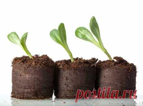 Кокосовый субстрат для рассады. Как приготовить и использовать кокосовый субстрат для посева семян и пересадки растений