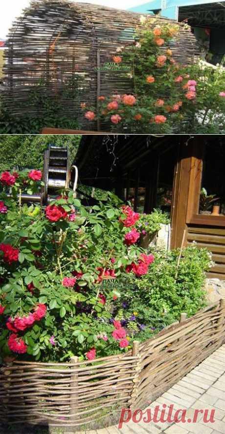 Плетень на даче - красиво и эстетично!