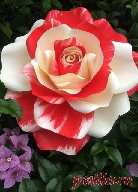 «Фото цветов | Розы» — карточка от пользователя Смирнов Александр в Яндекс.Коллекциях