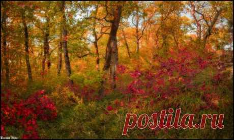 осень на орлиных скалах, Сочи