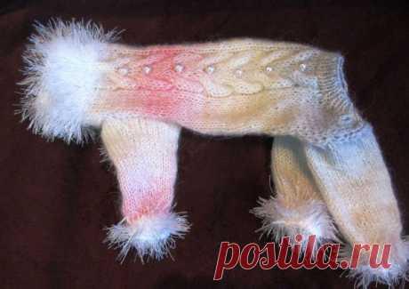 Вязаная одежда для собаки своими руками: инструкция, советы и фото