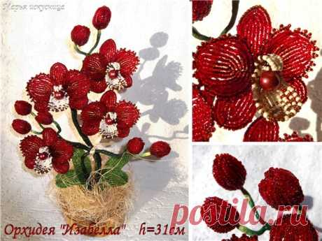 """Мк орхидеи """"Изабелла"""".Автор Мария Сипатова. – 4 фотографии"""