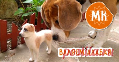 Видео мастер-класс по валянию собаки Алабай | Журнал Ярмарки Мастеров Видео мастер-класс по валянию собаки Алабай – бесплатный мастер-класс по теме: Сухое валяние, фильцевание ✓Своими руками ✓Пошагово ✓С фото