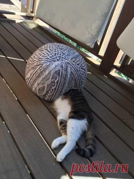 Кошки и сон - это нечто невероятное