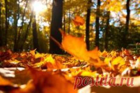 Сегодня 29 сентября в народном календаре Ефимия, Птичья костка