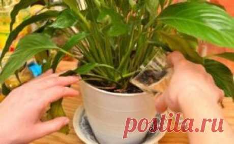 Простое средство,которое сотворит чудо даже с самыми хилыми растениями