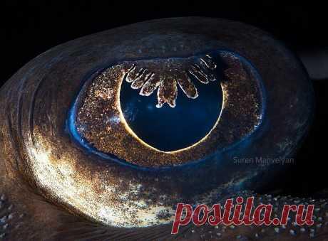 Невероятные глаза из мира животных
