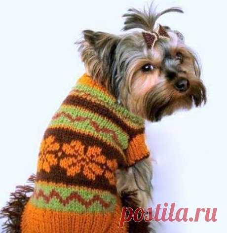 Одежда для собак | Записи в рубрике Одежда для собак | Дневник Паутинка777