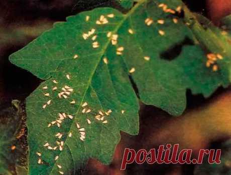 Вредитель комнатных растений Нематода - В мир цветов - медиаплатформа МирТесен
