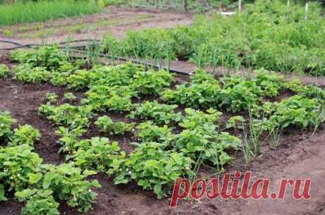 ¡Los manzanos – al norte, los tomates – al sur! ¿Cómo distribuir el lugar en la huerta? | 6 sotok