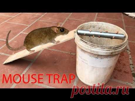 Stupid Mouse Trap / Stupid Mouse / Easy Mouse/Rat Trap/ The Rolling Log Mouse Trap In Action