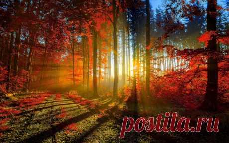 Красная осень: красивые фото красной осени. Красота осенней природы в фото.