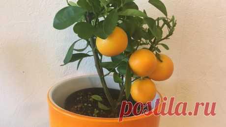 4 мандарина - древний азиатский способ омоложения за 4 дня (результат увидела после первой маски) | Книга рецептов молодости | Яндекс Дзен