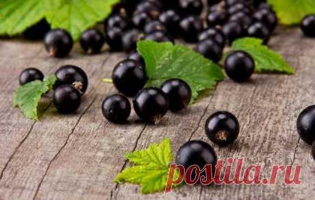 Черная смородина в собственном соку без сахара — рецепт домашней заготовки на зиму — Бабушкины секреты