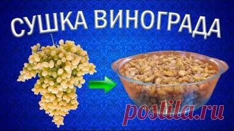 Как приготовить изюм из винограда кишмиш?   Сушилка для овощей и фруктов Ezidri