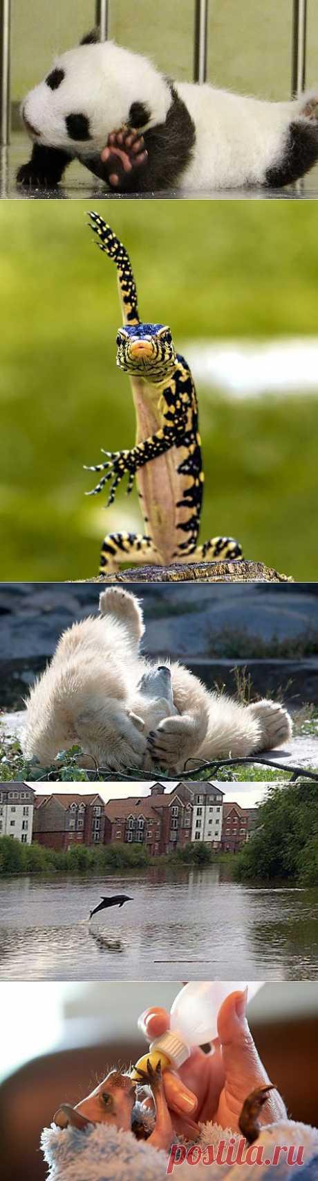 » Фотографии животных за неделю Это интересно!