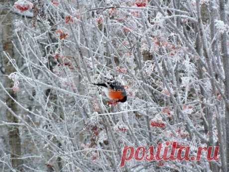 Какие выбрать растения для украшения зимнего сада. Как можно его преобразить, чем украсить? Вечнозеленые хвойники и ягодные кустарники преобразят ваш участок и привлекут птиц, сделав его ярким и сказочно красивым.