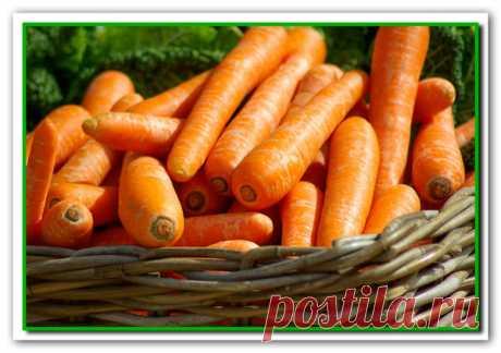 Ваша Морковь взойдет через 4-5 дней! | 4 Сезона огородника | Яндекс Дзен
