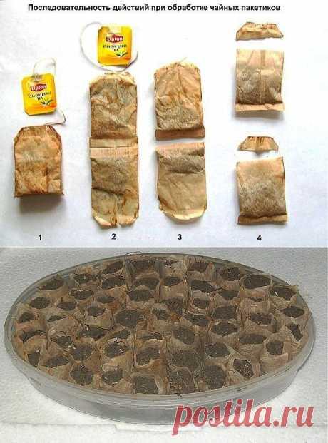 Необычный способ выращивания рассады.Для выращивания рассады можно использовать пакетики со спитым чаем. Ниже на фото показан пример, как с помощью ножниц получить из пакетиков для чая замену торфяным таблеткам.