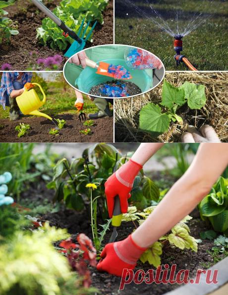 10 приемов, которые позволят поливать сад и огород намного реже