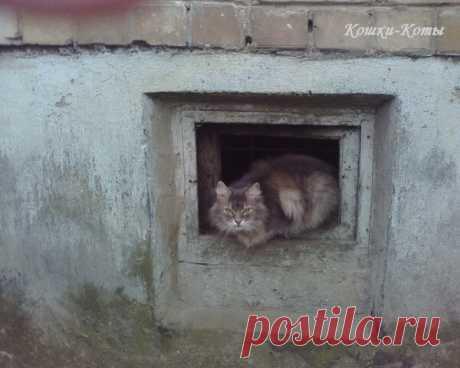Не приёмные окошки или кошачья бюрократия. Часть первая | Кошки & Коты | Яндекс Дзен  Кошки часто сидят в окошках. Подвальные окошки кошки, да и коты тоже любят. И очень часто можно увидеть, как они туда заглядывают. Или наоборот, оттуда выглядывают. Некоторые кошки в подвалах живут. А некоторые не живут, но посещают. Может быть, в гости ходят к знакомым. А может и по делам. По своим кошачьим делам. Но иногда эти кошачьи хождения напоминают хождения человеческие. В места, где тоже много