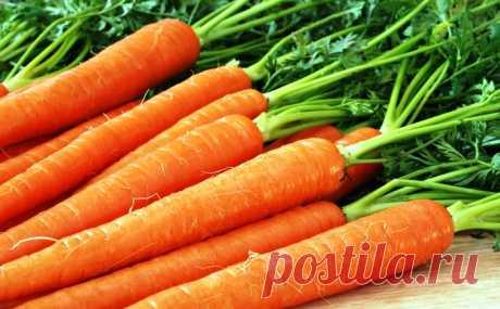 Чем подкормить морковь для хорошего роста